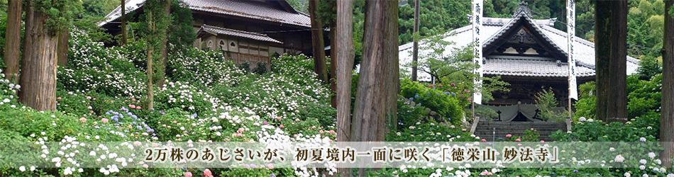 2万株のあじさいが、初夏境内一面に咲く「徳栄山 妙法寺」