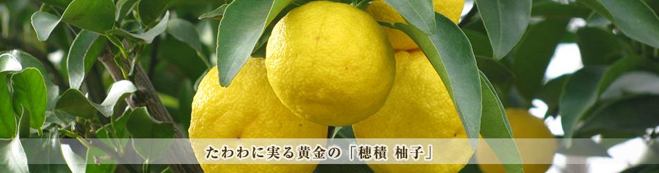 たわわに実る黄金の「穂積 柚子」