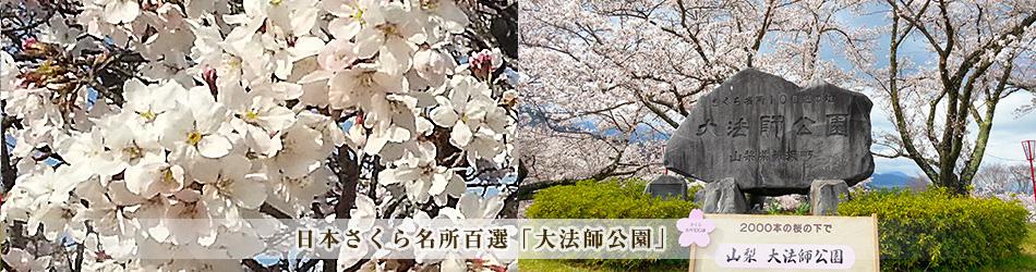 日本さくら名所百選「大法師公園」